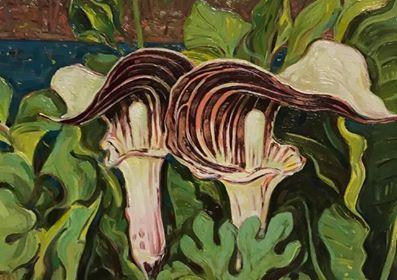 """Jack In The Pulpit"""